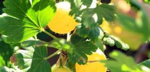 kleinfruit